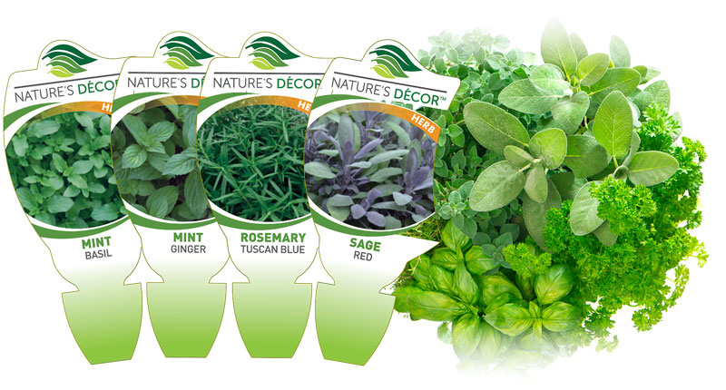 Natures Decor Herb Labels