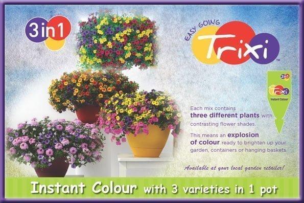 Trixi Summer 2015 Advert