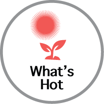 What's Hot Icon