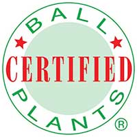 Ball Certified Plants
