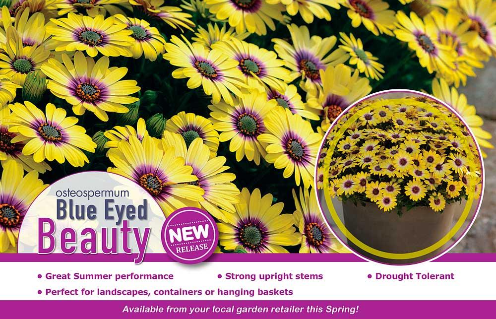 Osteo Blue Eyed Beauty Advert