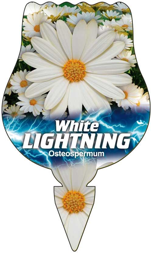 Osteo White Lightning
