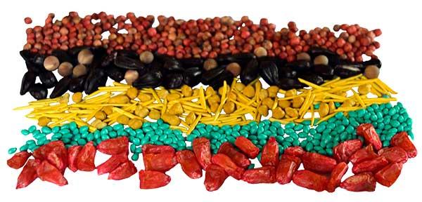 Multi Coloured Seeds