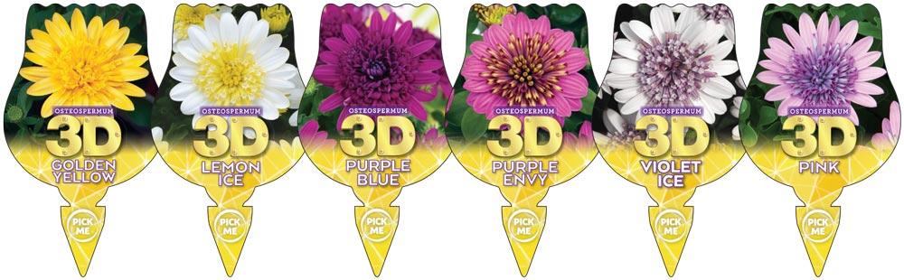Osteospermum 3D Labels
