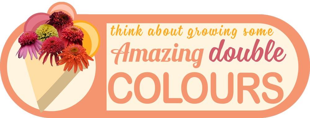 Echinacea Double Scoop Colours