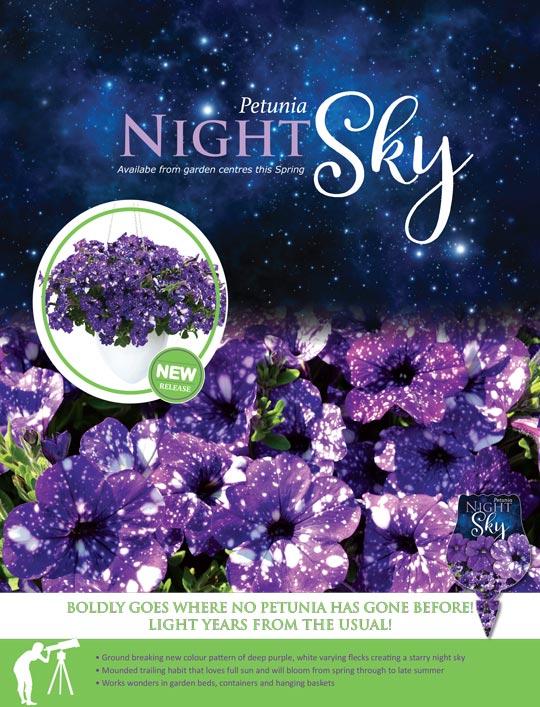 Petunia Night Sky