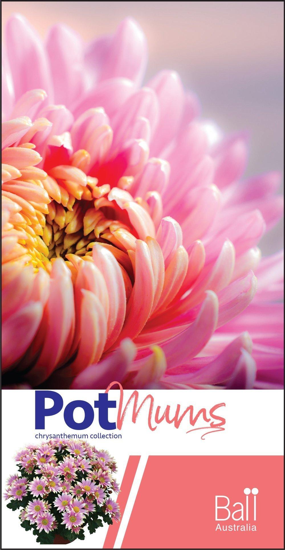 Pot Mums Brochure 2018