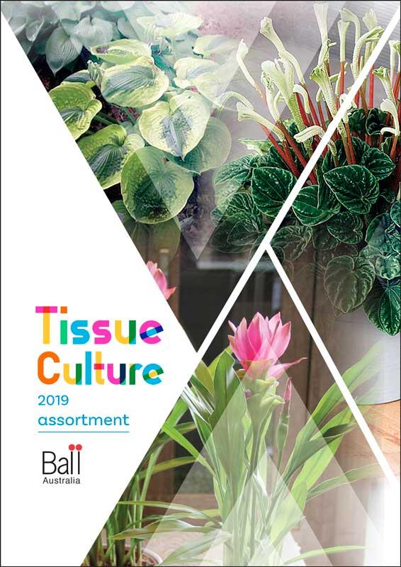 Tissue Culture 2019